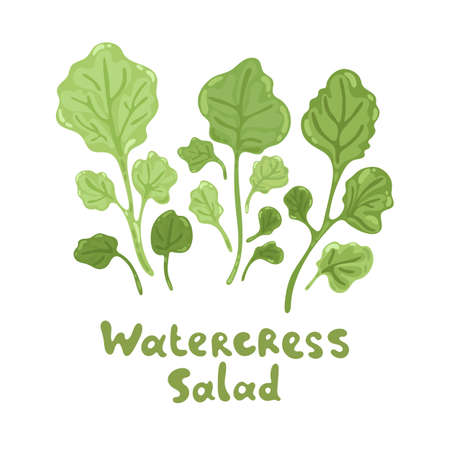Watercress fresh culinary plant. Cute flat illustration. Green seasoning cooking herbs. Hand drawn vector icon on a white background. Watercress salad for soup, meat and other dishes.
