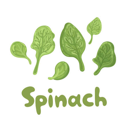 Spinach leaves - cute color flat icon. Agriculture, gastronomy, cooking concept. Bunch of fresh flying spinach close up. Vitamins and minerals. For articles, web design, dietary recommendations.