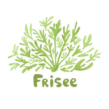 Frisee lettuce doodle icon. Cartoon frisee lettuce illustration. Frisee cute salad simple design. Salad leaves silhouettes. Modern style elements for recipe, cook book, menu design, label.