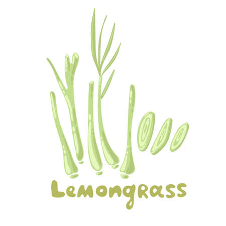 Lemongrass or Cymbopogon or Citronella grass. Culinary herb, Asian ingredient. Lemongrass herb vector illustration. Vegetable stem and lobules. Organic spice and botanical herb illustration Illustration