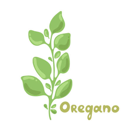 Oregano sprigs vector cute clipart illustration. Isolated plant with leaves. Herbal flat style illustration. Undetailed organic product icon. Cooking spicy ingredient. Ingredient for flavoring dishes.