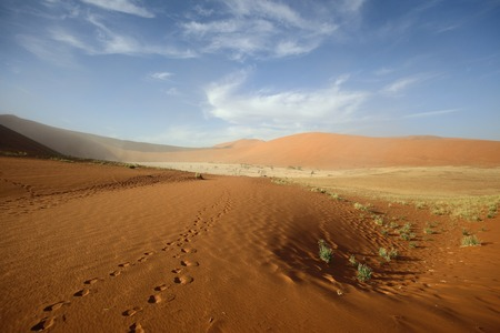 afrika: Footprints in the sand at Dooievlei