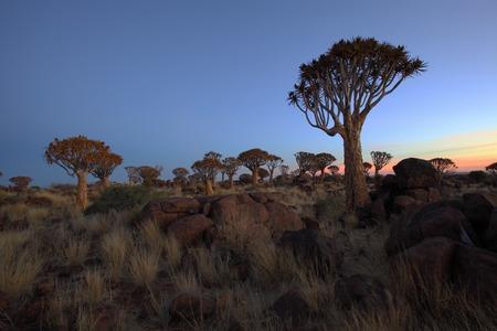 quiver: Zonsondergang bij Quiver Tree Forest Stockfoto