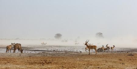 np: Nxai Pan NP dusty waterhole
