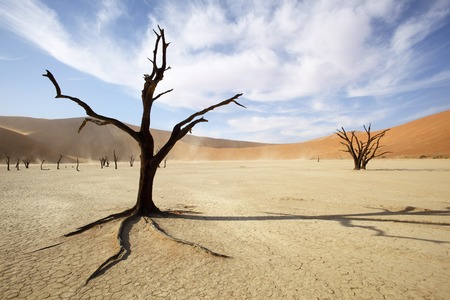 afrika: Dead Tree in Deadvlei Stock Photo
