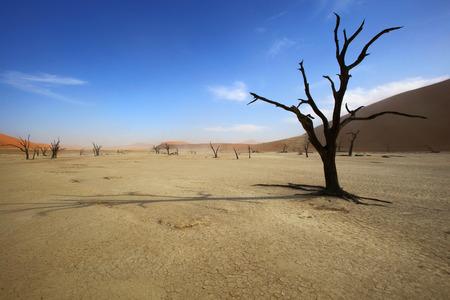 dead tree: Dead Tree in Deadvlei Stock Photo