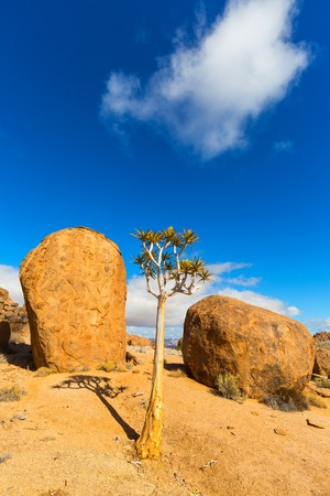 quiver: Quiver Tree and the rocks Stock Photo