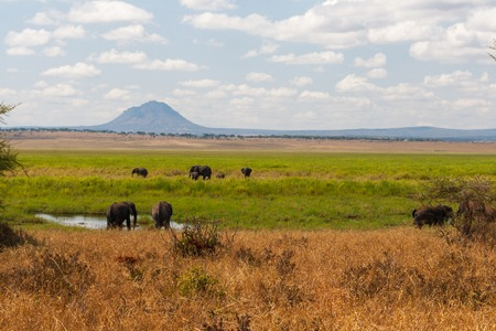 np: Elephants in Tarangire NP Stock Photo