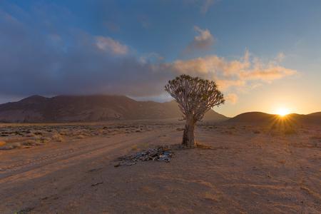 quiver: Quiver Tree Sunrise