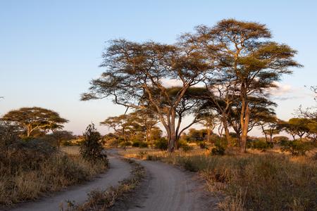 np: Tracks and trees in Tarangire NP