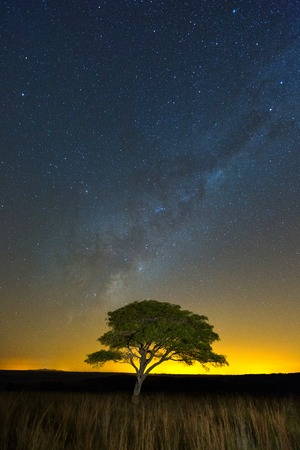 milkyway: a Lone Tree under the milkyway Stock Photo