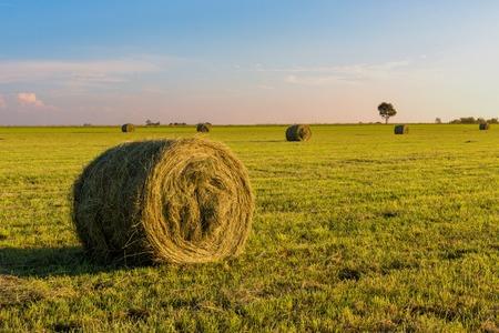 bales: Round fodder bales