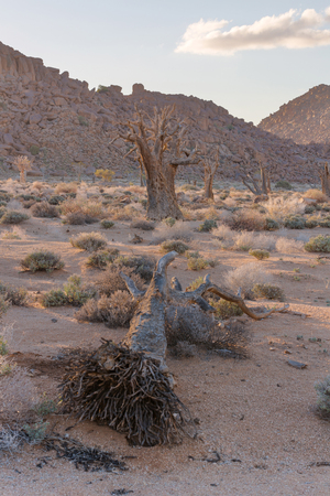 quiver: Dead Quiver Tree