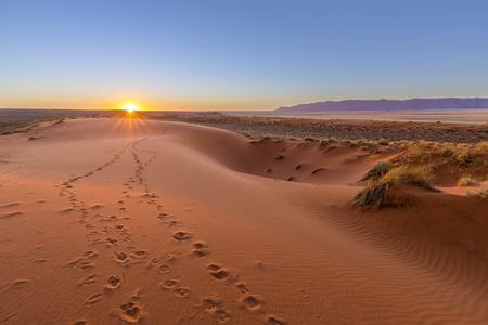 Oryx tracks to sunset Reklamní fotografie