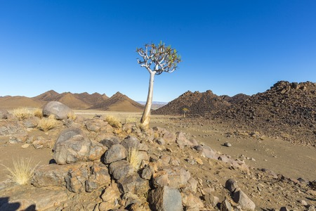quiver: Quiver Tree and Rocks