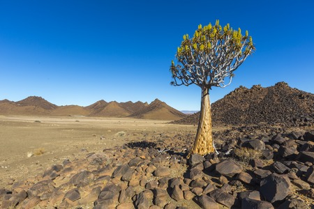quiver: Quiver Tree