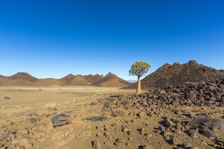 quiver: Lone quiver tree