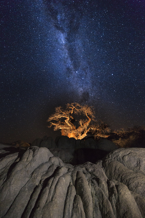 africa baobab tree: Baobab tree under the milkyway