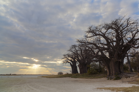 africa baobab tree: Sun through clouds at Baines Baobabs Stock Photo