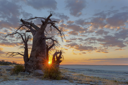 africa baobab tree: Sunset at Kubu Island