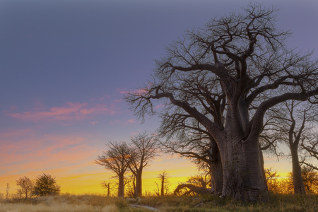 Colorfull sunrise at Baines Baobabs