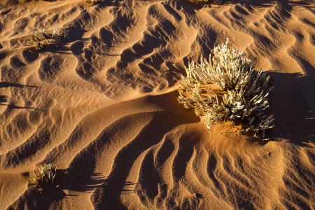 Dry grass and sand patterns Stock Photo
