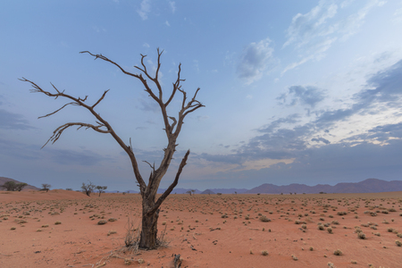 Arbre épineux de chameau mort dans un paysage aride