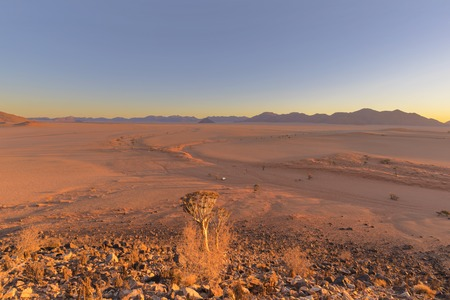 Quiver tree and wide open spaces in the desert Banco de Imagens