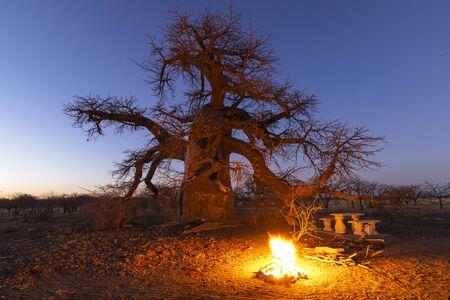 Campfire at campsite under large baobab tree after sunset Reklamní fotografie