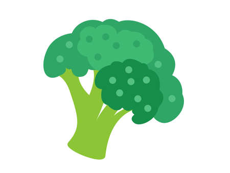 colorful broccoli for magazine, farmers market, vegetarian salad recipe design, web.  Vegetable on an isolated background. Icon Vector flat illustration