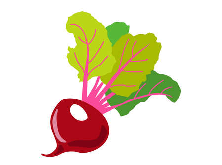 Red beet root with green leaves on white isolated background. Icon Vector flat  illustration. Cartoon  Concept of healthy food, vegetable  for magazine, farmers market, vegetarian salad recipe design,