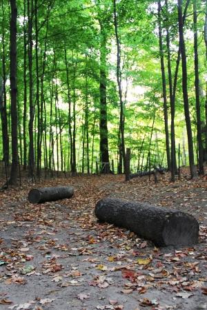 숲의 경로