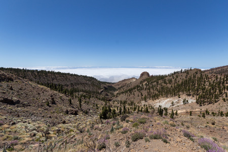 nger: mountain, forest landscape  Tenerife - Pico del Teide