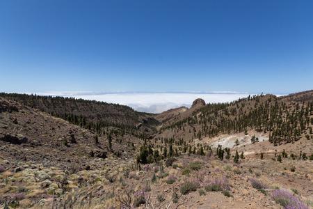 nger: mountain, forest landscape  Tenerife - Pico del Teide