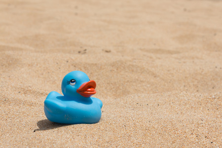 hollidays: White beach - sand and duckling