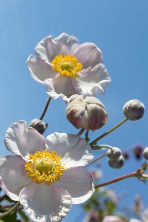 to thrive: flower closeup - macro blossom on blue sky