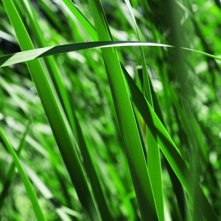 meadow  grass: green meadow grass closeup - nature background