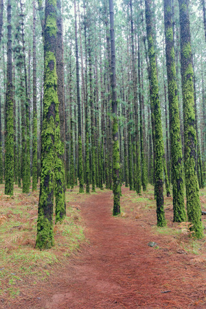 hiking path: footpath hiking path in coniferous forest Stock Photo