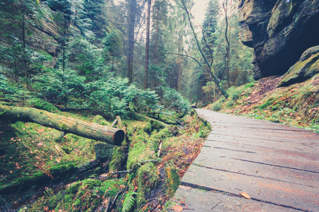 hiking path: wooden hiking path through forest landscape