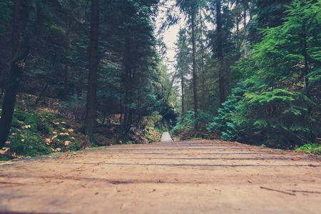 hiking path: wooden hiking path in forest landscape