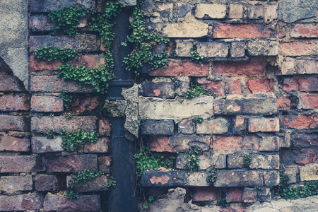 overgrown: old vintage brick wall closeup with overgrown drip rail