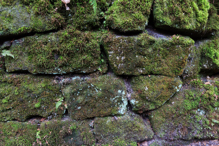 overgrown: old stone wall overgrown with green moss