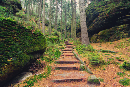 hiking path: wooden hiking path inside forest landscape Stock Photo
