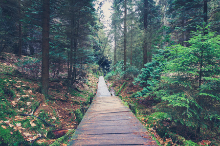 hiking path: wooden footpath inside forest landscape - hiking path in nature