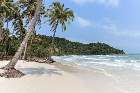 white sand: white sand beach, ocean and palm trees