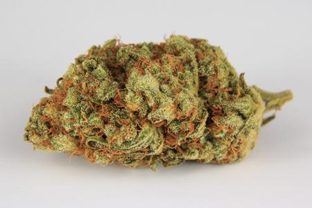 medical marijuana bud isolated on white background , cannabis macro