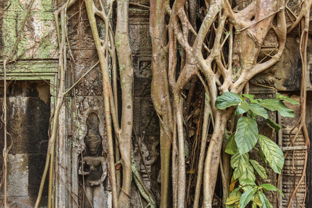 overgrown: Angkor Wat - temple ruins overgrown by plants Stock Photo