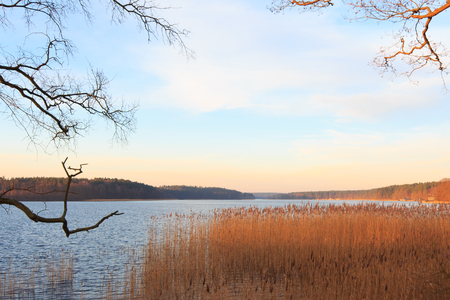 riverside trees: lake view landscape  - evening sun over water Stock Photo