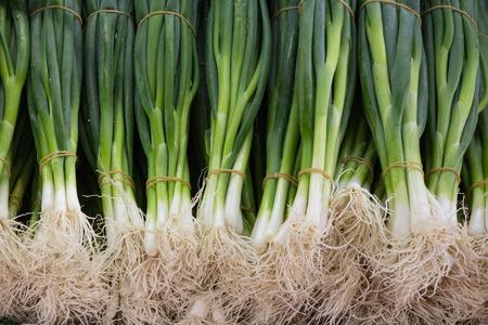 cebollas: cebollas de primavera - manojo de cebollas de primavera de cerca