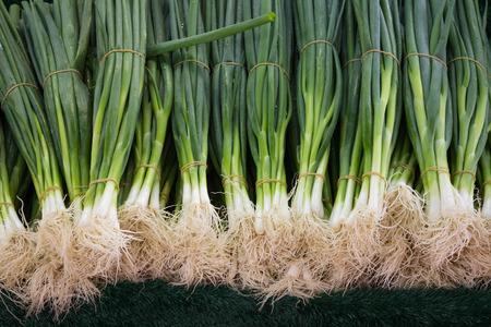 cebollitas: cebollas de primavera - manojo de cebollas de primavera de cerca